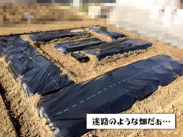 画像:分割された畑