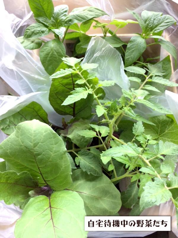 画像:野菜畑